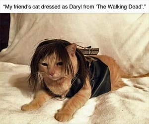 cat, twd, and funny image