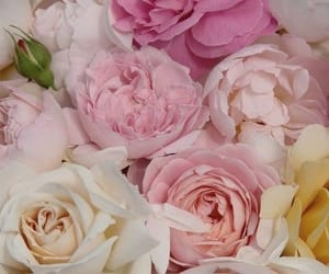 flowers, peonies, and roses image