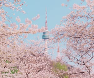 korea, pink, and nature image