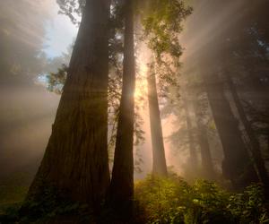 fog, forest, and vyer image