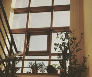 plants, aesthetic, and window image