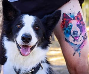 ad, colorful, and dog image