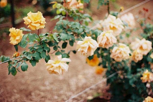 rosa, vintage, and libro image