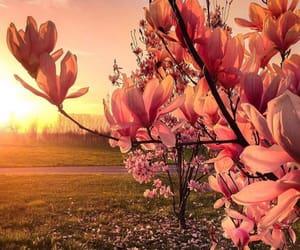 colours, landscape, and nature image