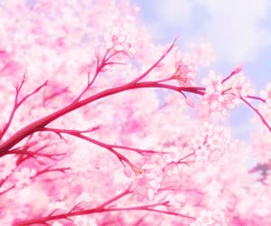 anime, cherry blossom, and flowers image