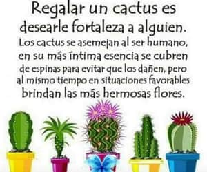 cactus, frases, and frases en español image