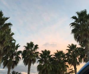 beautiful, blue, and palm image