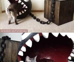 awesome, kitty, and lol image