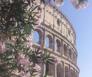 flowers, pink, and rome image