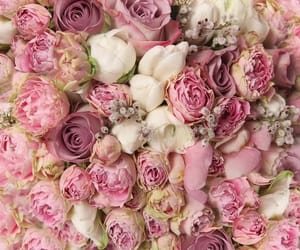 flowers, pink roses, and white roses image