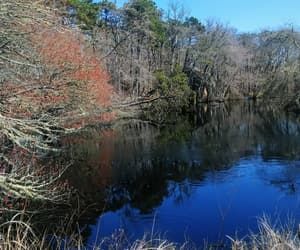 peace, pond, and reflection image