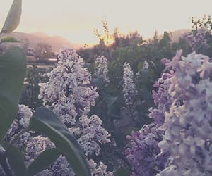 aesthetic, flower field, and flowers image