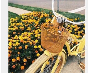 bike, pretty, and yellow aesthetic image