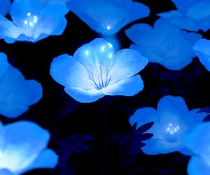 gif, blue, and flowers image