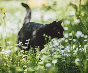 cat, black, and flowers image