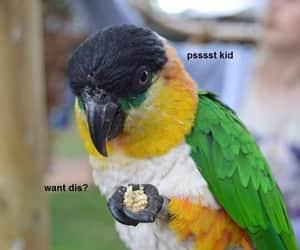 bird, funny, and birb image
