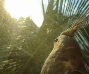 bird, cockatiel, and funny image
