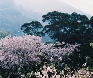 nature, flowers, and tree image