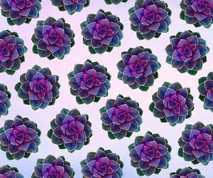 background, cactus, and floral image