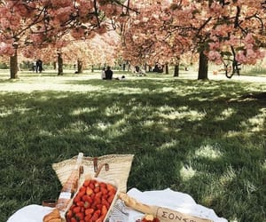 park, food, and picnic image