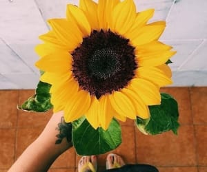 flowers, sunflower, and tumblr image