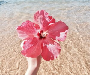 flowers, beach, and photography image