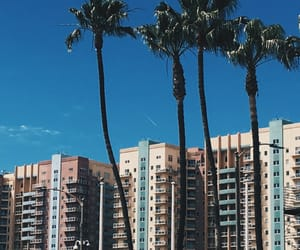 aesthetic, buildings, and palm trees image