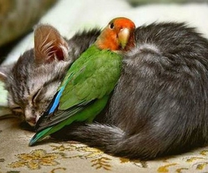 cat, lovely, and cat and bird image