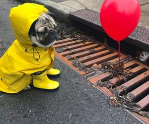 it, dog, and cute image