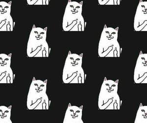 black, cats, and random image