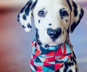 blackandwhite, pets, and dog image