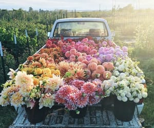 things i love, article, and flowers image