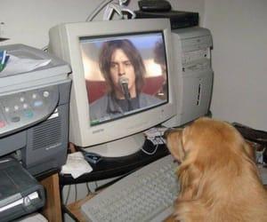 computer, dog, and julian image