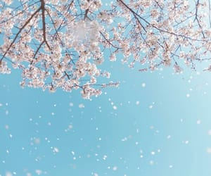 aesthetic, blue, and cherryblossom image