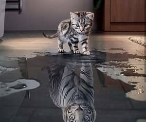 amazing, nice, and tiger image