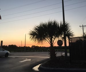 aesthetic, grunge, and palm tree image