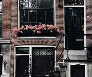 amsterdam, door, and flowers image