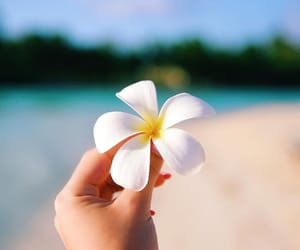 flower, summer, and beach image