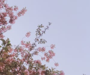 aesthetic, light, and flowers image