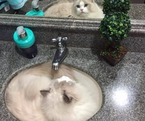 bathroom, cat, and sink image