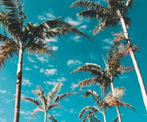 wallpaper, palms, and blue image