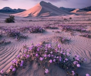 beauty, landscape, and nature image