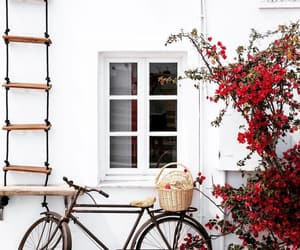 bike, city, and flowers image