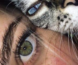 eyes, cat, and animal image