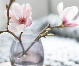 magnolia, shabby chic, and vintage image