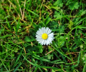background, flower, and grass image