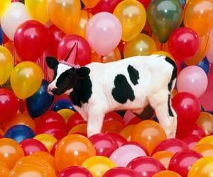 animal, pet, and birthday image