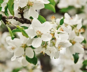 blossom, spring, and flowers image