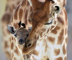 Animales and jirafa image
