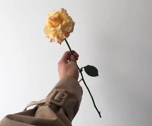flower, minimalist, and minimalism image